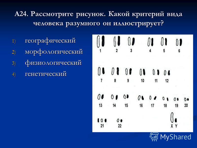 А24. Рассмотрите рисунок. Какой критерий вида человека разумного он иллюстрирует? 1) географический 2) морфологический 3) физиологический 4) генетический