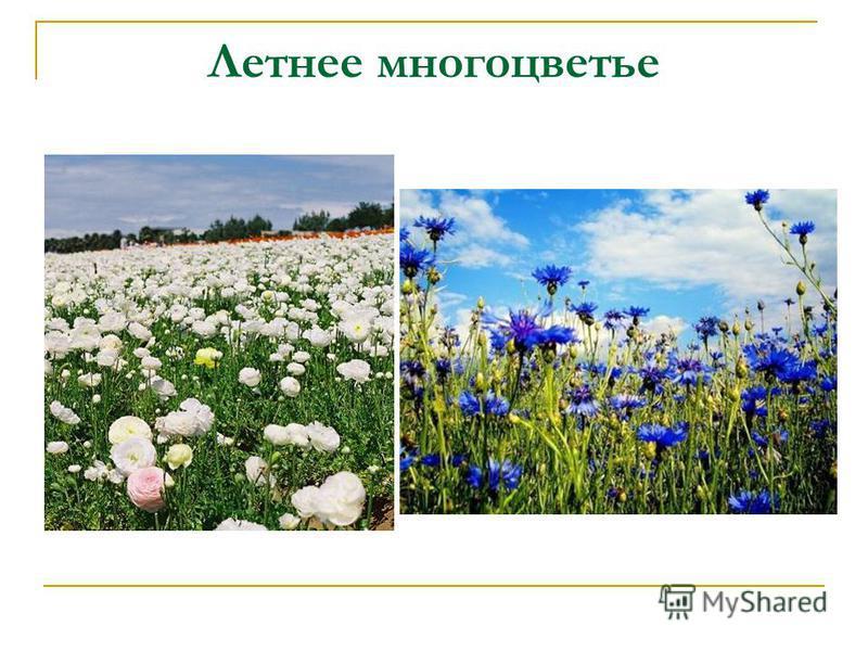 Летнее многоцветье