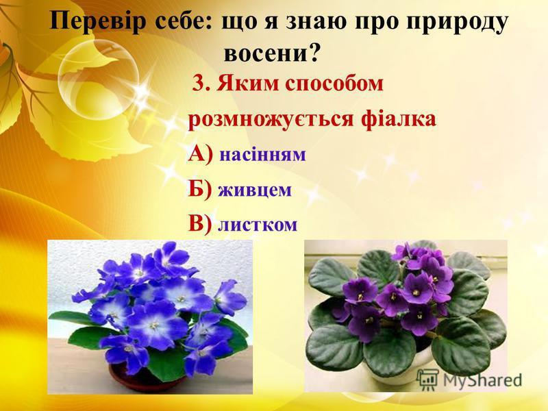 Перевір себе: що я знаю про природу восени? 3. Яким способом розмножується фіалка А) насінням Б) живцем В) листком