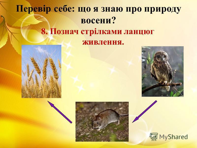 Перевір себе: що я знаю про природу восени? 8. Познач стрілками ланцюг живлення.