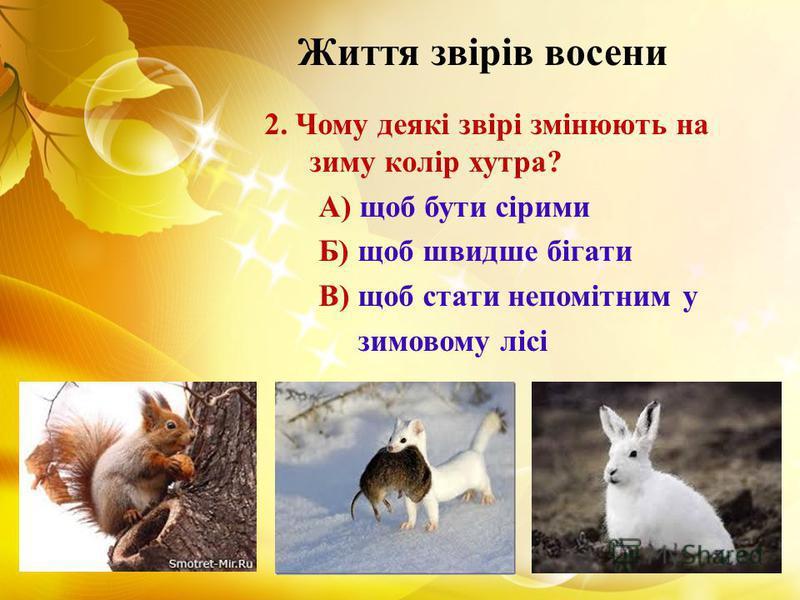 Життя звірів восени 2. Чому деякі звірі змінюють на зиму колір хутра? А) щоб бути сірими Б) щоб швидше бігати В) щоб стати непомітним у зимовому лісі
