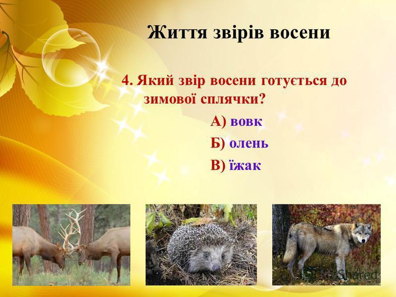 Життя звірів восени 4. Який звір восени готується до зимової сплячки? А) вовк Б) олень В) їжак