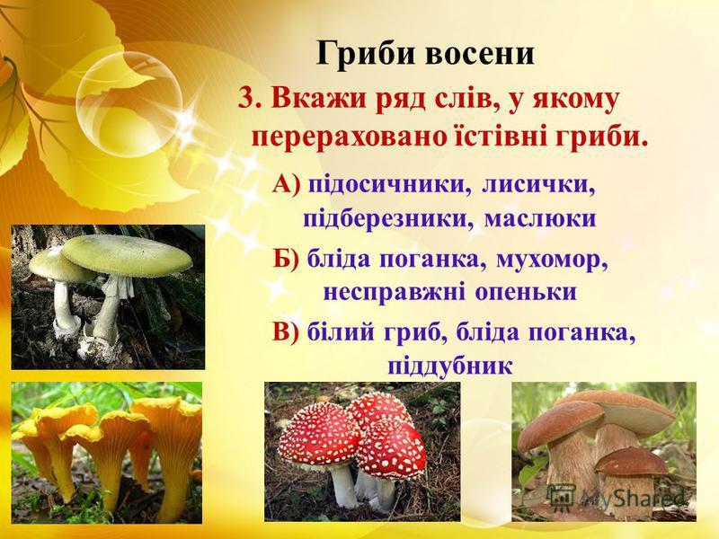 Гриби восени 3. Вкажи ряд слів, у якому перераховано їстівні гриби. А) підосичники, лисички, підберезники, маслюки Б) бліда поганка, мухомор, несправжні опеньки В) білий гриб, бліда поганка, піддубник