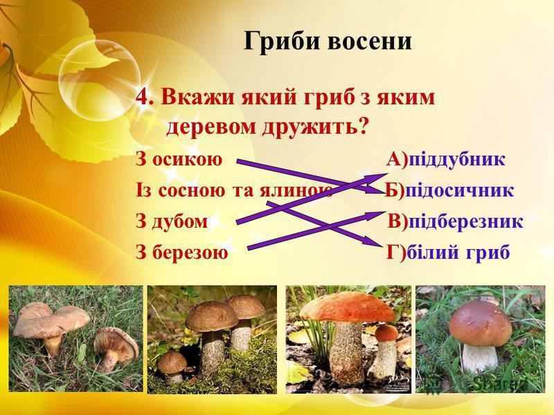 Гриби восени 4. Вкажи який гриб з яким деревом дружить? З осикою А)піддубник Із сосною та ялиною Б)підосичник З дубом В)підберезник З березою Г)білий гриб