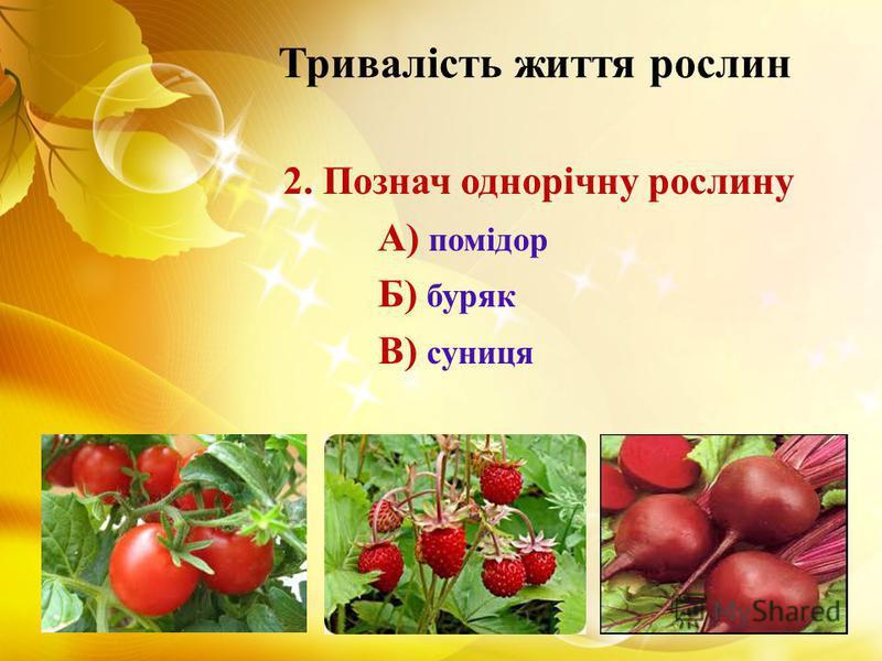 Тривалість життя рослин 2. Познач однорічну рослину А) помідор Б) буряк В) суниця