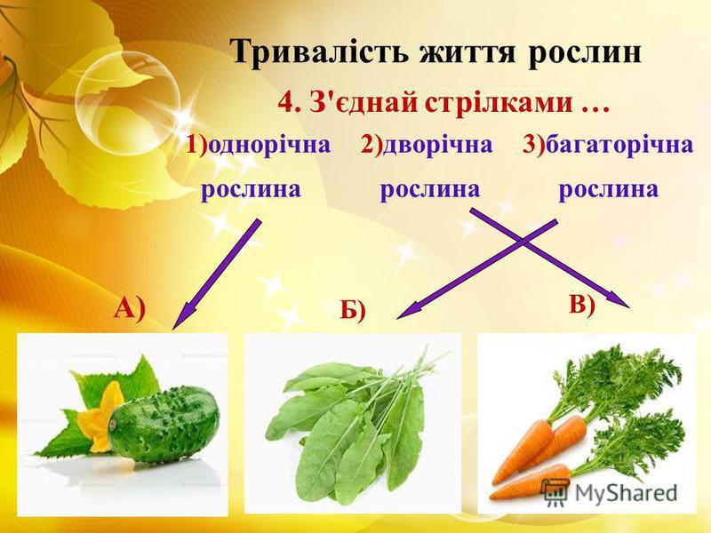 Тривалість життя рослин 4. З'єднай стрілками … 1)однорічна 2)дворічна 3)багаторічна рослина рослина рослина А) Б) В)