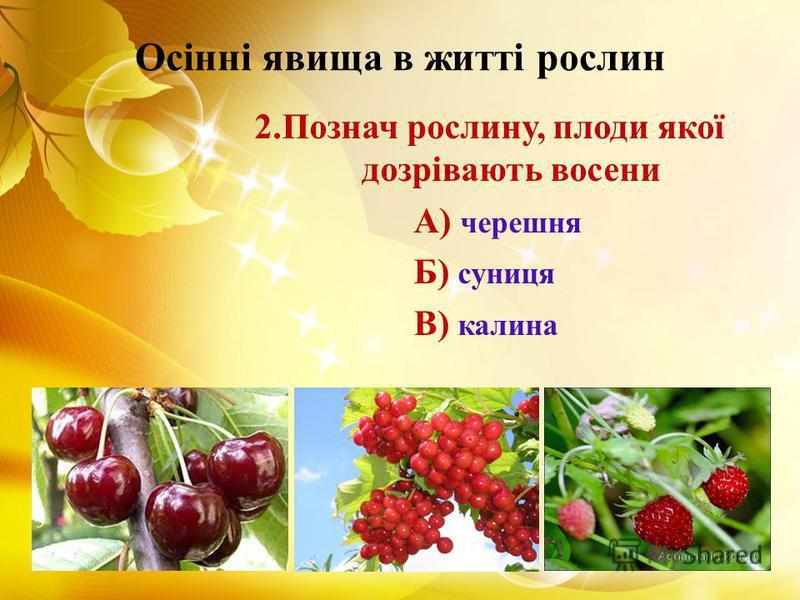Осінні явища в житті рослин 2.Познач рослину, плоди якої дозрівають восени А) черешня Б) суниця В) калина