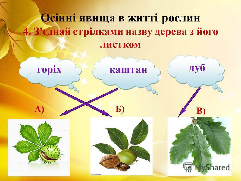 Осінні явища в житті рослин 4. З'єднай стрілками назву дерева з його листком горіх дуб каштан А)Б) В)