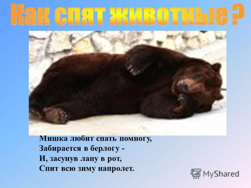 Мишка любит спать помногу, Забирается в берлогу - И, засунув лапу в рот, Спит всю зиму напролет.