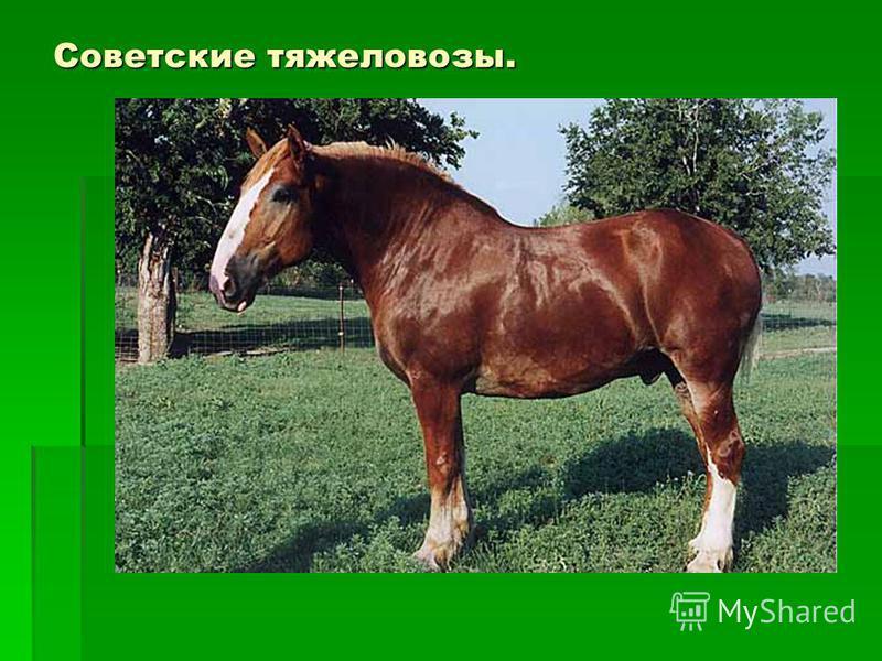 Советские тяжеловозы.