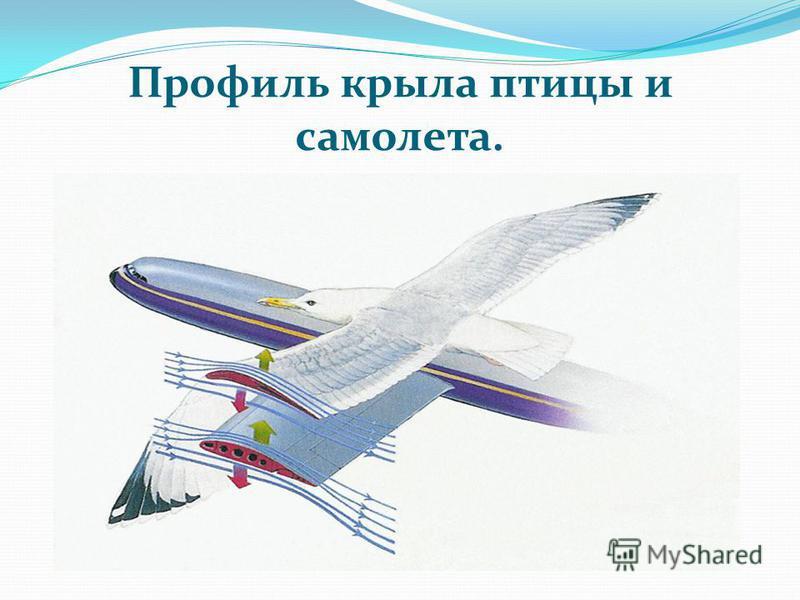 Профиль крыла птицы и самолета.