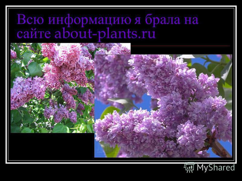 Всю информацию я брала на сайте about-plants.ru