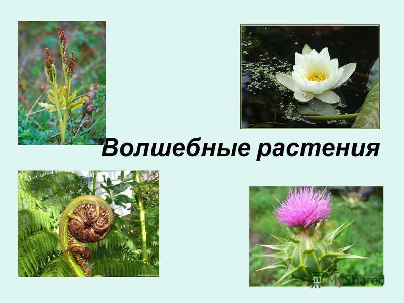 Волшебные растения