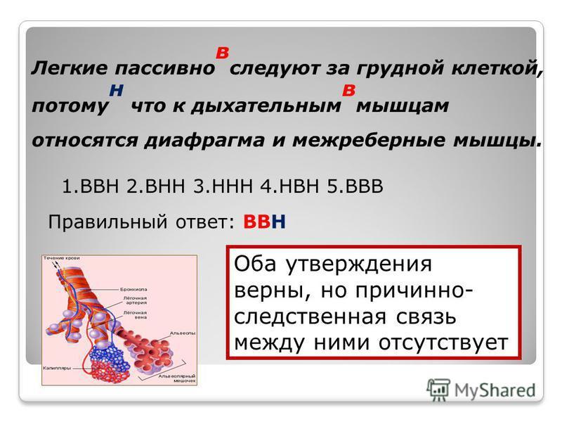 Легкие пассивно в следуют за грудной клеткой, потому н что к дыхательным в мышцам относятся диафрагма и межреберные мышцы. 1. ВВН 2. ВНН 3. ННН 4. НВН 5. ВВВ Правильный ответ: ВВН Оба утверждения верны, но причинно- следственная связь между ними отсу