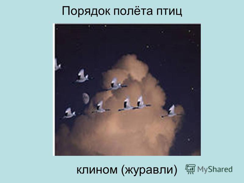 Порядок полёта птиц клином (журавли)