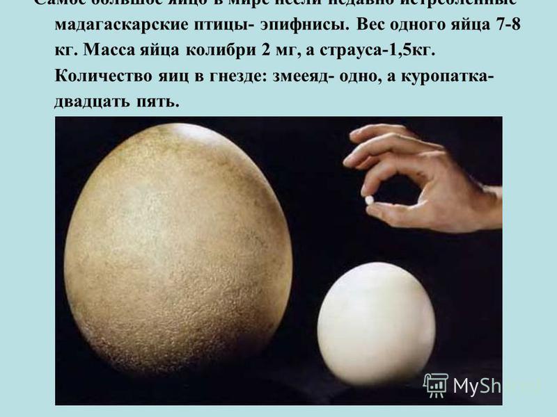 Самое бойльшое яйцо в мире несли недавно истреблённые мадагаскарские птицы- эпифнисы. Вес одного яйца 7-8 кг. Масса яйца колибри 2 мг, а страуса-1,5 кг. Количество яиц в гнезде: змееяд- одно, а куропатка- двадцать пять.