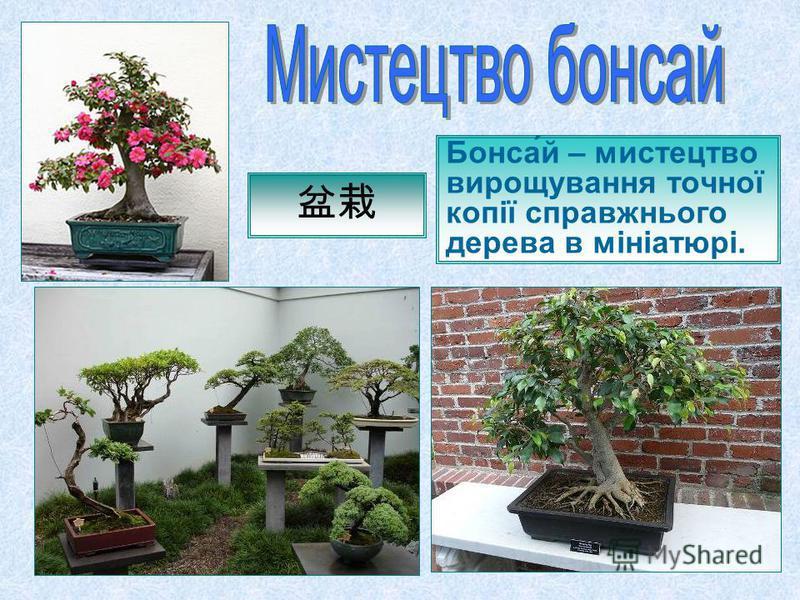Бонса́й – мистецтво вирощування точної копії справжнього дерева в мініатюрі.