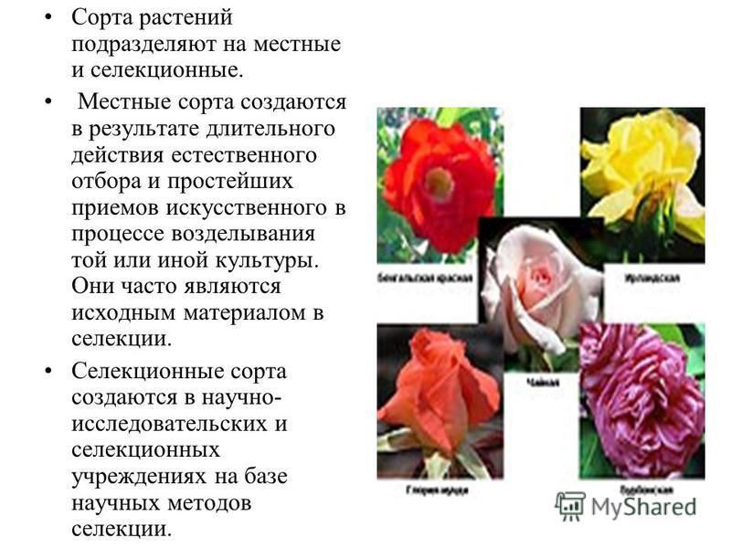 Сорта растений подразделяют на местные и селекционные. Местные сорта создаются в результате длительного действия естественного отбора и простейших приемов искусственного в процессе возделывания той или иной культуры. Они часто являются исходным матер