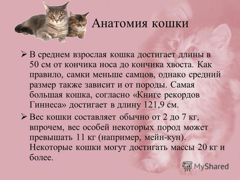 Анатомия кошки В среднем взрослая кошка достигает длины в 50 см от кончика носа до кончика хвоста. Как правило, самки меньше самцов, однако средний размер также зависит и от породы. Самая большая кошка, согласно «Книге рекордов Гиннеса» достигает в д