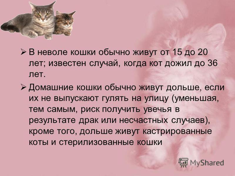 В неволе кошки обычно живут от 15 до 20 лет; известен случай, когда кот дожил до 36 лет. Домашние кошки обычно живут дольше, если их не выпускают гулять на улицу (уменьшая, тем самым, риск получить увечья в результате драк или несчастных случаев), кр