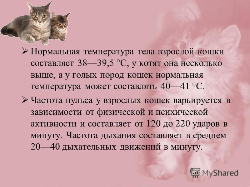 Нормальная температура тела взрослой кошки составляет 3839,5 °C, у котят она несколько выше, а у голых пород кошек нормальная температура может составлять 4041 °C. Частота пульса у взрослых кошек варьируется в зависимости от физической и психической