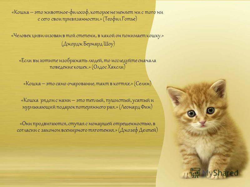 «Кошка – это животное-философ, которое не меняет ни с того ни с сего свои привязанности.» (Теофил Готье) «Человек цивилизован в той степени, в какой он понимает кошку.» (Джордж Бернард Шоу) «Если вы хотите изображать людей, то исследуйте сначала пове