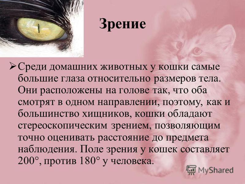 Зрение Среди домашних животных у кошки самые большие глаза относительно размеров тела. Они расположены на голове так, что оба смотрят в одном направлении, поэтому, как и большинство хищников, кошки обладают стереоскопическим зрением, позволяющим точн