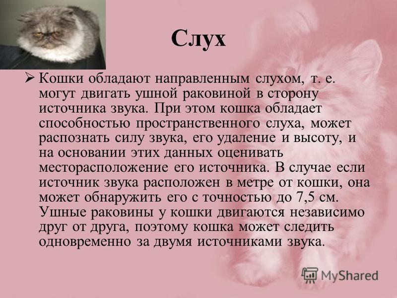 Слух Кошки обладают направленным слухом, т. е. могут двигать ушной раковиной в сторону источника звука. При этом кошка обладает способностью пространственного слуха, может распознать силу звука, его удаление и высоту, и на основании этих данных оцени