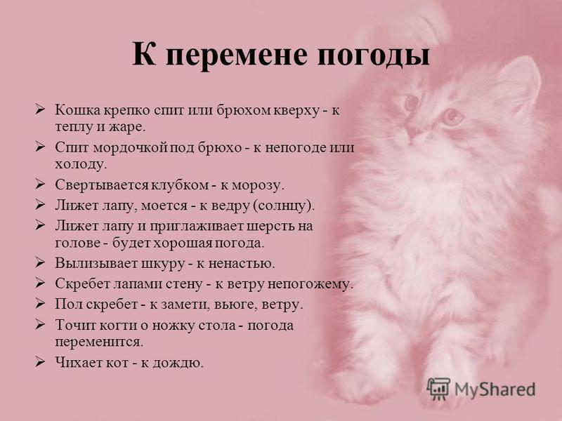 К перемене погоды Кошка крепко спит или брюхом кверху - к теплу и жаре. Спит мордочкой под брюхо - к непогоде или холоду. Свертывается клубком - к морозу. Лижет лапу, моется - к ведру (солнцу). Лижет лапу и приглаживает шерсть на голове - будет хорош