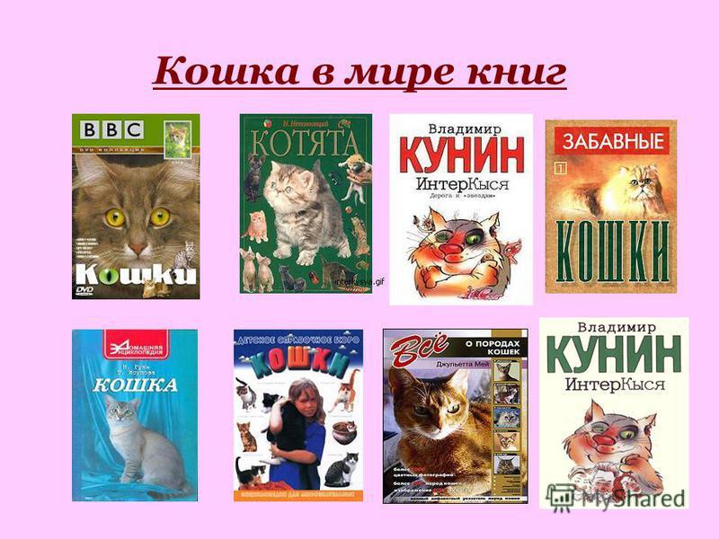 Кошка в мире книг