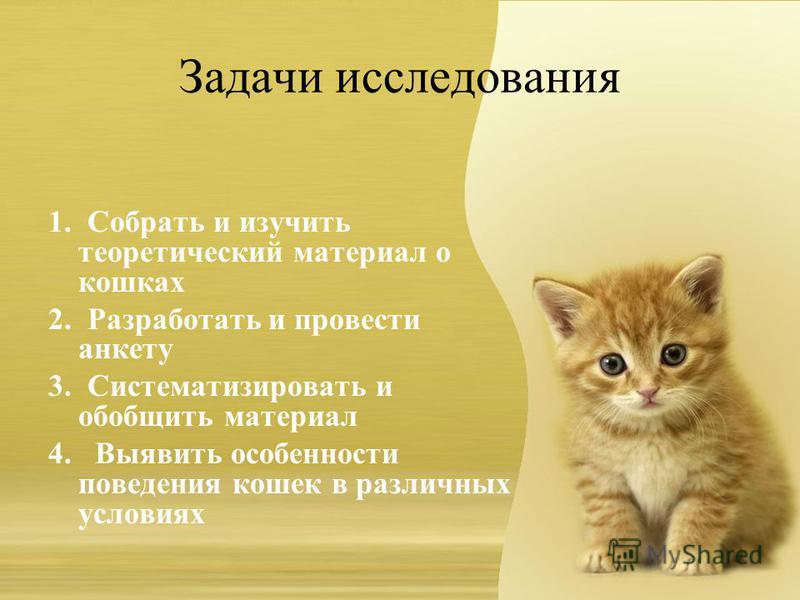 Задачи исследования 1. Собрать и изучить теоретический материал о кошках 2. Разработать и провести анкету 3. Систематизировать и обобщить материал 4. Выявить особенности поведения кошек в различных условиях