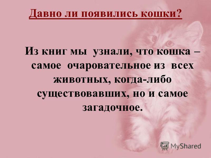 Из книг мы узнали, что кошка – самое очаровательное из всех животных, когда-либо существовавших, но и самое загадочное. Давно ли появились кошки?