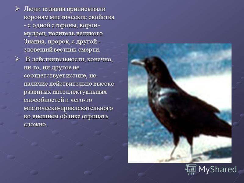 Люди издавна приписывали воронам мистические свойства - с одной стороны, ворон - мудрец, носитель великого Знания, пророк, с другой - зловещий вестник смерти. Люди издавна приписывали воронам мистические свойства - с одной стороны, ворон - мудрец, но