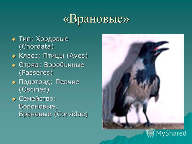 «Врановые» Тип: Хордовые (Chordata) Тип: Хордовые (Chordata) Класс: Птицы (Aves) Класс: Птицы (Aves) Отряд: Воробьиные (Passeres) Отряд: Воробьиные (Passeres) Подотряд: Певчие (Oscines) Подотряд: Певчие (Oscines) Семейство: Вороновые, Врановые (Corvi