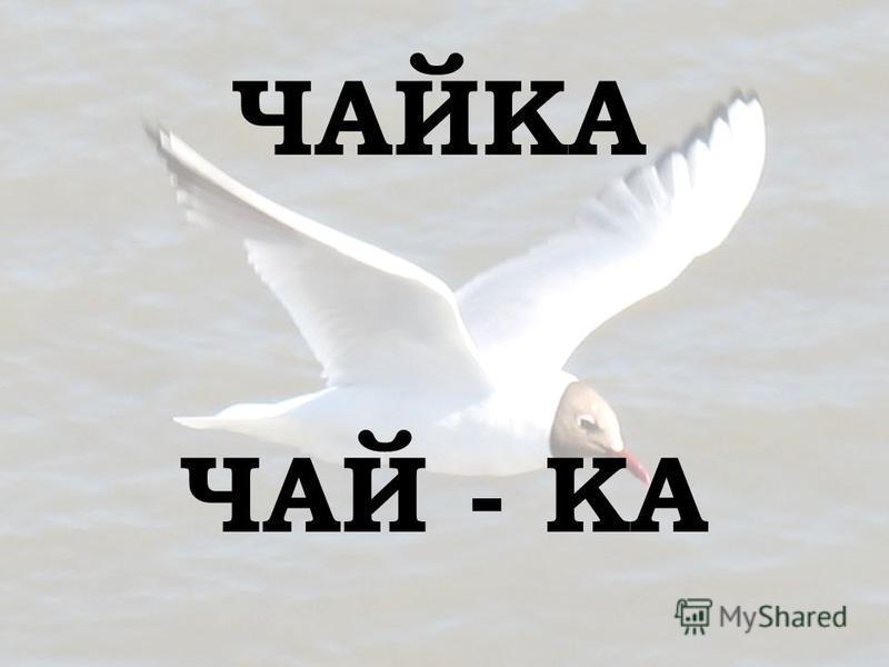 ЧАЙКА ЧАЙ - КА