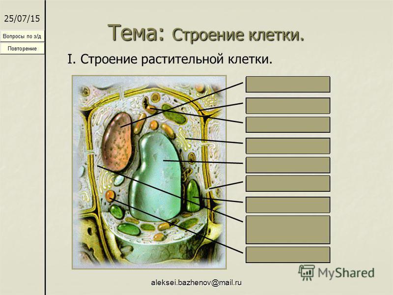 aleksei.bazhenov@mail.ru Тема: Строение клетки. 25/07/15 I. Строение растительной клетки. Ядро Оболочка Митохондрии Вакуоль Поры Аппарат Гольджи Хлоропласты Эндоплазматическая мембрана Лизосомы