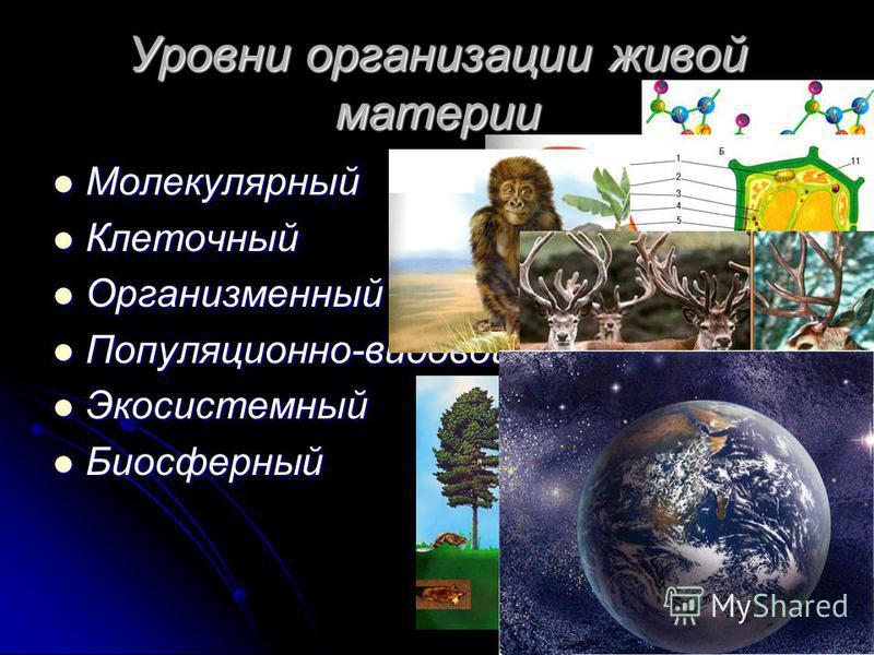 Уровни организации живой материи Молекулярный Молекулярный Клеточный Клеточный Организменный Организменный Популяционно-видовой Популяционно-видовой Экосистемный Экосистемный Биосферный Биосферный