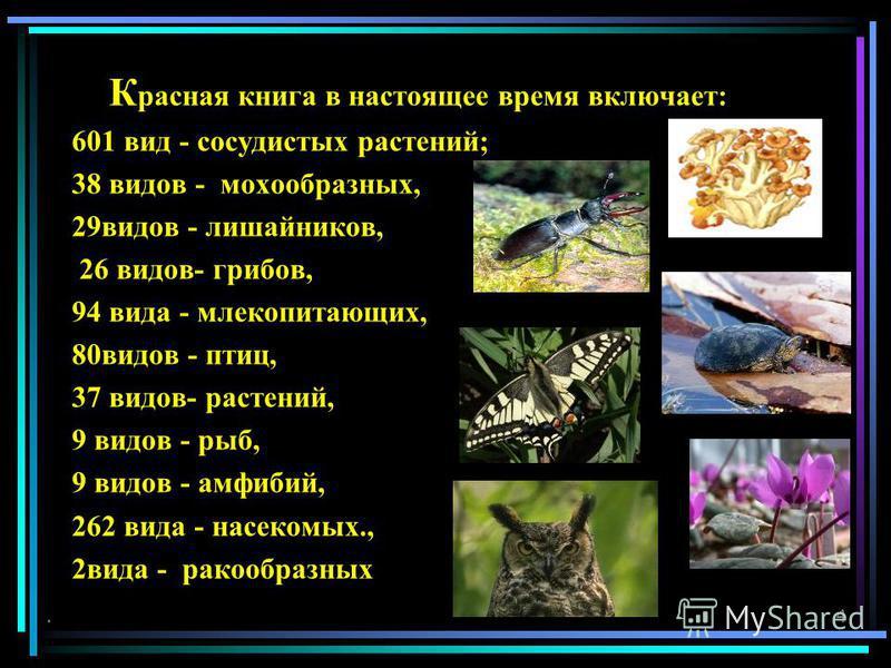 К расная книга в настоящее время включает: 601 вид - сосудистых растений; 38 видов - мохообразных, 29 видов - лишайников, 26 видов- грибов, 94 вида - млекопитающих, 80 видов - птиц, 37 видов- растений, 9 видов - рыб, 9 видов - амфибий, 262 вида - нас