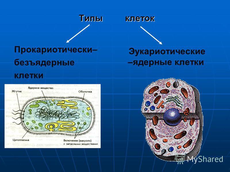 Типы клеток Прокариотически– безъядерные клетки Эукариотические –ядерные клетки