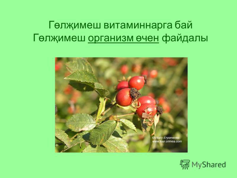Гөлҗимеш витаминнарга бай Гөлҗимеш организм өчен файдалы
