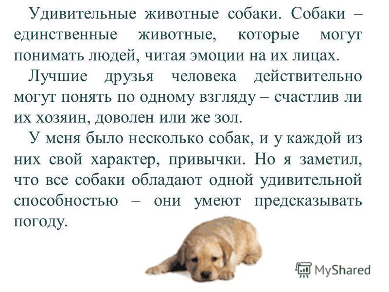 Удивительные животные собаки. Собаки – единственные животные, которые могут понимать людей, читая эмоции на их лицах. Лучшие друзья человека действительно могут понять по одному взгляду – счастлив ли их хозяин, доволен или же зол. У меня было несколь