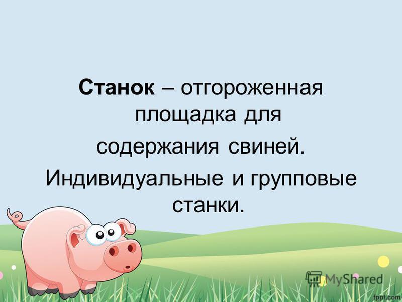 Станок – отгороженная площадка для содержания свиней. Индивидуальные и групповые станки.