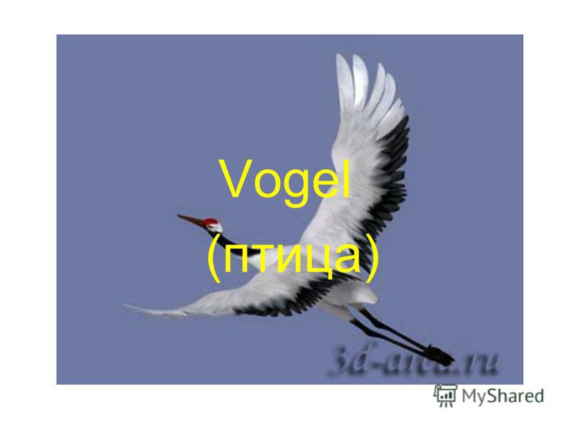 Vogel (птица)