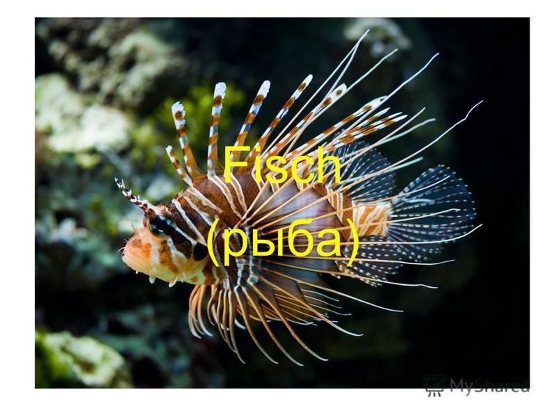 Fisch (рыба)