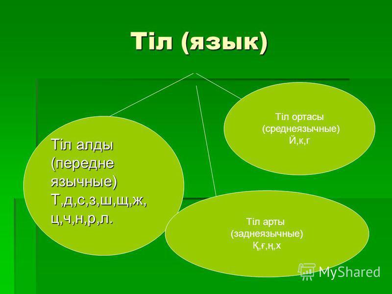 Тіл (язык) Тіл аллоды (переднеязычные)Т,д,с,з,ш,щ,ж,ц,ч,н,р,л. Тіл ортасы (среднеязычные) Й,к,г Тіл арты (заднеязычные) Қ,ғ,ң,х