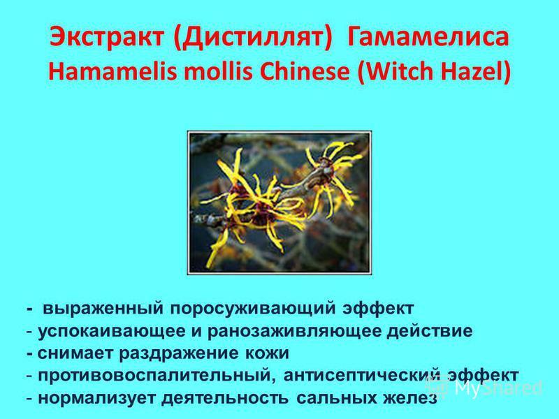 Экстракт (Дистиллят) Гамамелиса Hamamelis mollis Chinese (Witch Hazel) - выраженный просуживающий эффект - успокаивающее и ранозаживляющее действие - снимает раздражение кожи - противовоспалительный, антисептический эффект - нормализует деятельность