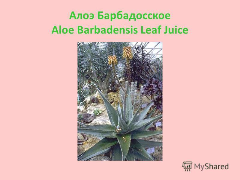 Aлоэ Барбадосское Aloe Barbadensis Leaf Juice