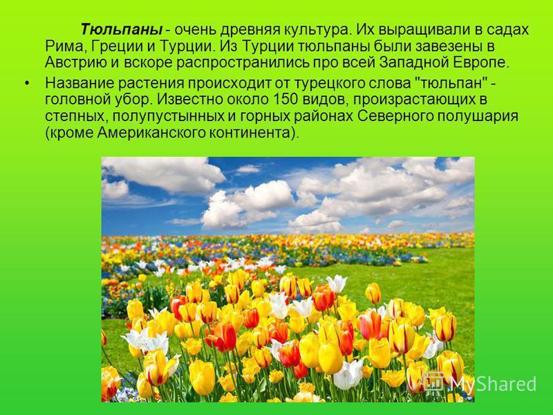 Тюльпаны - очень древняя культура. Их выращивали в садах Рима, Греции и Турции. Из Турции тюльпаны были завезены в Австрию и вскоре распространились про всей Западной Европе. Название растения происходит от турецкого слова