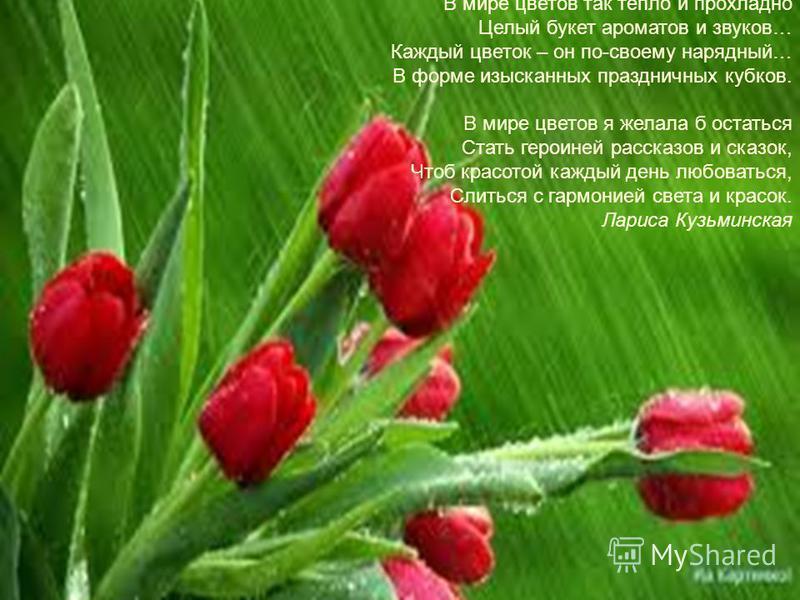 В мире цветов так тепло и прохладно Целый букет ароматов и звуков… Каждый цветок – он по-своему нарядный… В форме изысканных праздничных кубков. В мире цветов я желала б остаться Стать героиней рассказов и сказок, Чтоб красотой каждый день любоваться