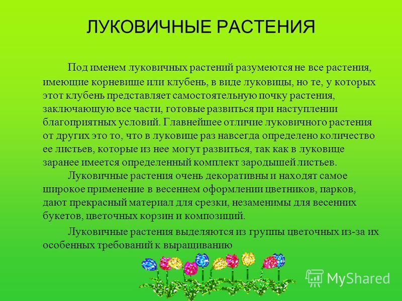 ЛУКОВИЧНЫЕ РАСТЕНИЯ Под именем луковичных растений разумеются не все растения, имеющие корневище или клубень, в виде луковицы, но те, у которых этот клубень представляет самостоятельную почку растения, заключающую все части, готовые развиться при нас
